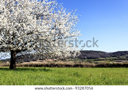 tree with white flowers on grass in spring