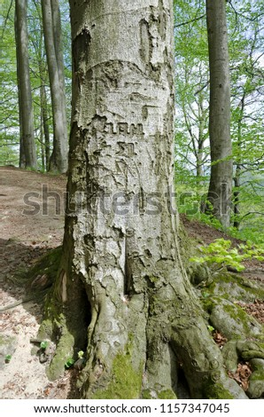 Tree with words and numbers carved in a bark  #1157347045