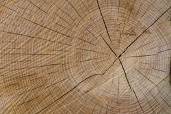 Tree wood Background