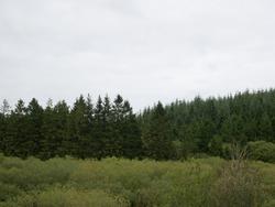 Treeline at the dusk Reservoir