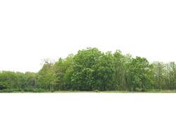 Treeline isolated on a white background.