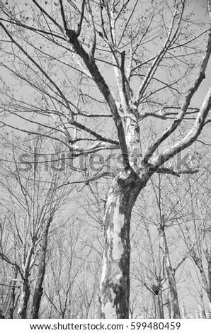 Trees #599480459