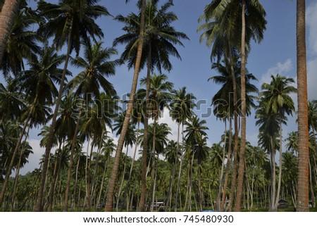 Trees #745480930