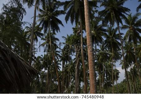 Trees #745480948