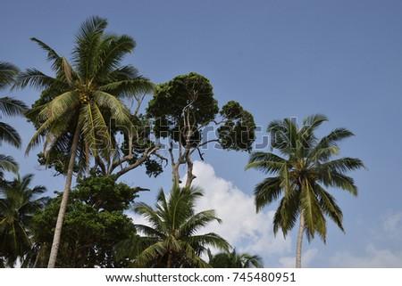 Trees #745480951
