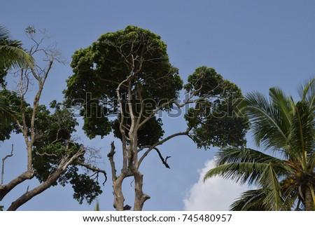 Trees #745480957