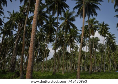 Trees #745480963