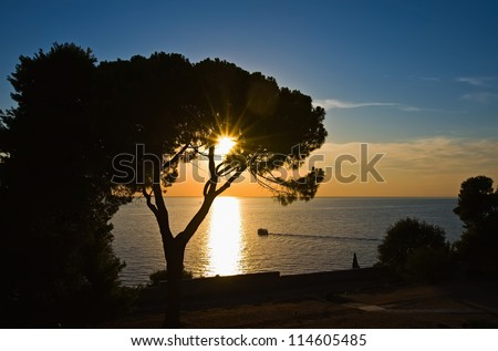 trees against a decline and the sun, beams of the coming sun pass through branches of trees