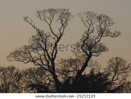 Trees against a dusk sky silhouette, Ely, Cambridgeshire, England