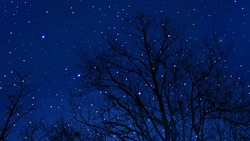 Trees against starry sky background. Trees at night. Forest at night. Trees against night sky background. Trees in the dark. Tree silhouette against dark sky background. Night sky backgrounds.