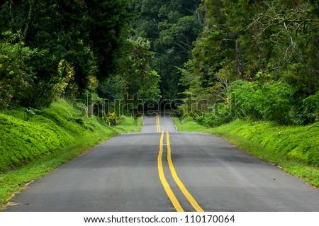 Trees along a empty road, Boquete village, Panama,Central America