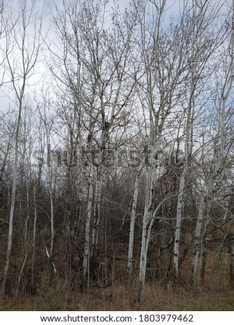 Trees along the hiking trail of Rice Creek North Regional Trail before spring Stock photo ©