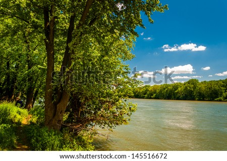 Trees along the Potomac River on a sunny spring day, Point of Rocks, Maryland.
