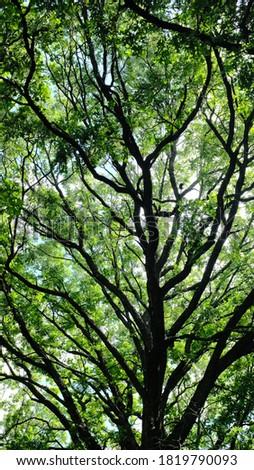 Trees along the Rice Creek Hiking Trail Stock photo ©