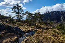 Trees and a creek on a mountain side. Hiking Mount Rødsfjellet. The mountain is 526 meters above sea level and located in Bjørnafjorden municipality in Norway