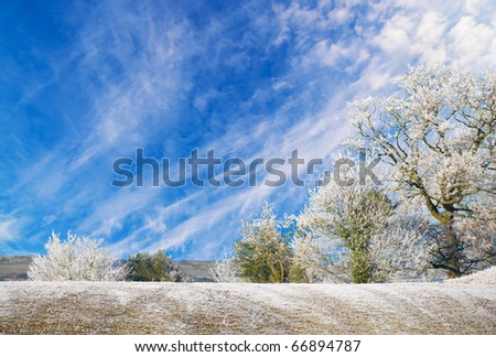 trees and hedgerow covered in a hoar frost with a frosty field in the foreground and clear, bright blue winter sky