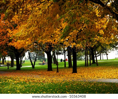 Trees and leaves at the park