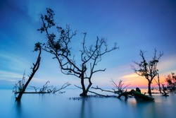 Trees and mangroves at the beach during the blue sky sunset
