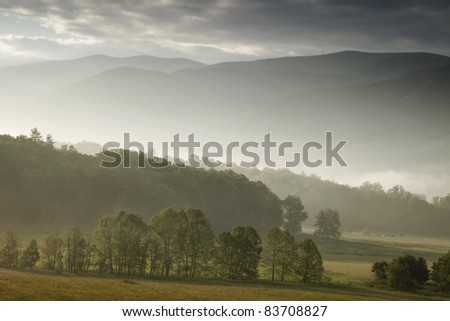 Trees and mist in a valley between mountains