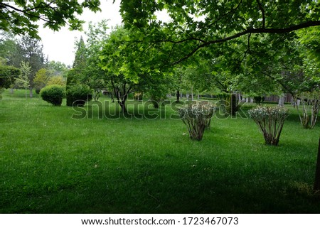 Trees and plants in a botanic park in Spring Stok fotoğraf ©