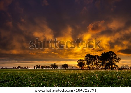 Trees and sunset on field #184722791