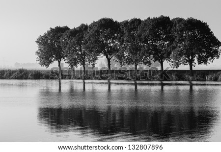 Trees and their reflections in a Dutch rural landscape in monochrome tones.