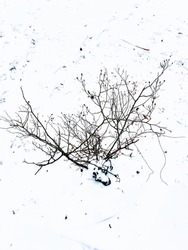 trees and twigs in snowy weather