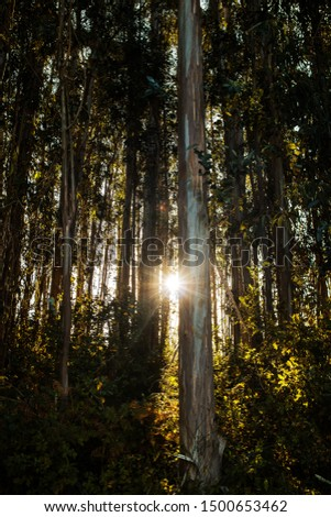 trees and vegetation in the forest with the sun between