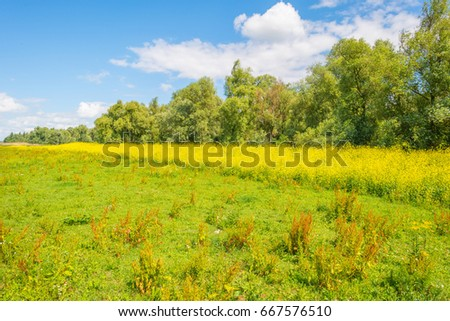 Trees and wild flowers in a field in summer #667576510