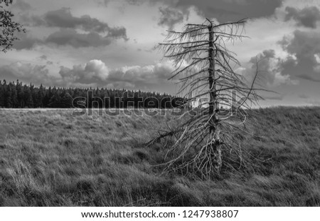 Trees and Woods and Landscape #1247938807