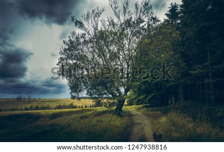 Trees and Woods and Landscape #1247938816