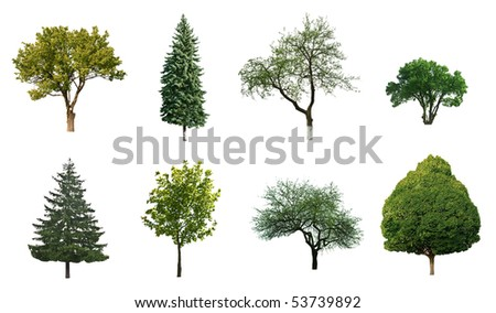 trees are isolated on a white background