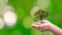 Trees are planted on coins in human hands with blurred natural backgrounds, plant growth ideas, and environmentally friendly investments.