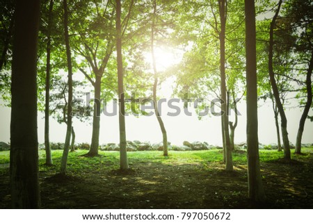 Trees at sunset - Shutterstock ID 797050672