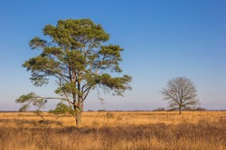 Trees at the grass field of the Noordsche Veld nature reserve in Drenthe, Netherlands
