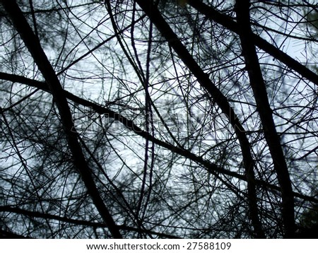 Trees branches abstract background