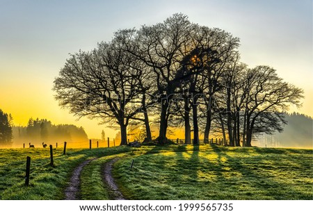 Trees by a rural road in the morning fog at dawn. Sunrise trees at dawn fog. Foggy morning at dawn in countryside. Early morning country at dawn
