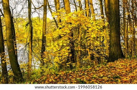 Trees by the river in the autumn forest. Autumn forest scene. Autumn forest foliage. Foliage in autumn