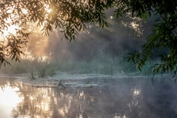 Trees by the river in the morning sun. Silhouette of plants against the background of dawn in summer. Fog over the water at dawn. Branches of trees over water in fog.