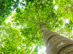 Trees can help offset the buildup of carbon dioxide in the air and reduce the greenhouse effect