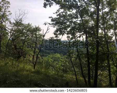 Trees Chillen in the woods Stockfoto ©