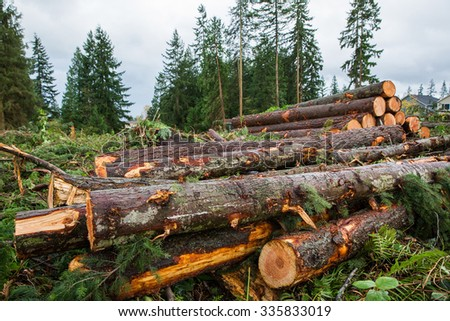 Trees chopped and stacked