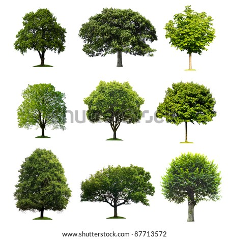 Shutterstock Trees Collection