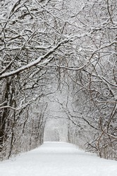 Trees covered by snow around forest walkway in winter time