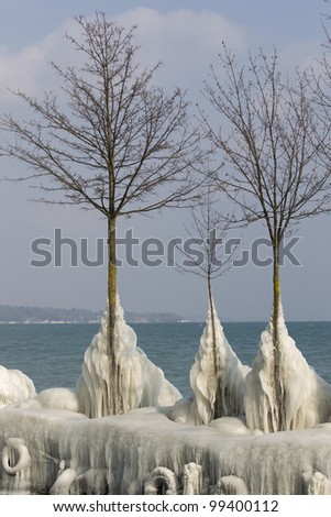 Trees covered in ice formations