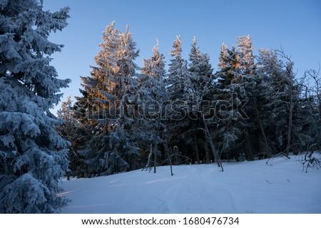 Trees covered in snow in the mountians during sunrise - a winter hike in Babia Góra National Park, Poland (Drzewa pokryte śniegiem w górach, wschód słońca na wędrówce w Babiogórskim PN) Zdjęcia stock ©