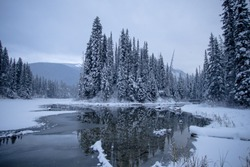 Trees covered in snow near Emerald Lake in Field, British Columbia, Canada
