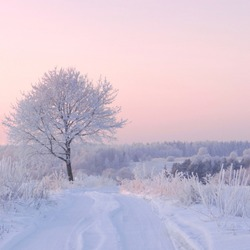 Trees covered with frost beautifully sunlight sun. Snow and cold. Amazing winter view