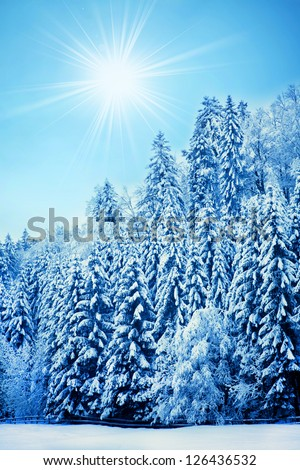 Trees covered with hoarfrost. Beautiful winter landscape with snow covered trees