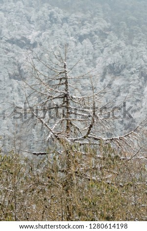 Trees covered with white fluffy snow. Mountain fir forest during winter, White snow and ice and frost on forest trees in cold winter bright sunny day clear blue sky light. Rural landscape morning pics